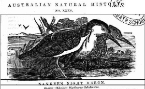 Australian Home Companion and Band of Hope Journal - 17 Nov 1860